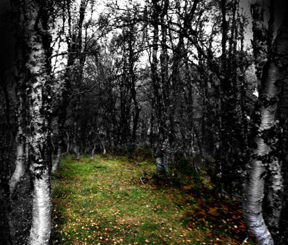 Svart hvitt bilde av en klaring i skogen, med grønt gress på bakken